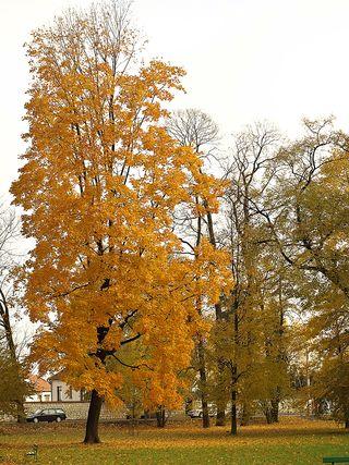 Fall orangee 2