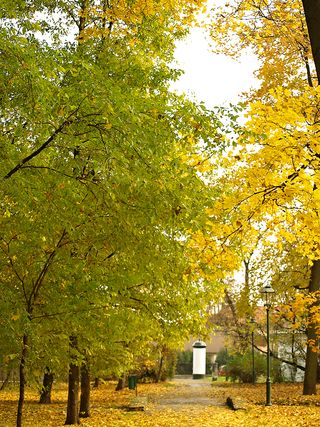 Fall yellow green