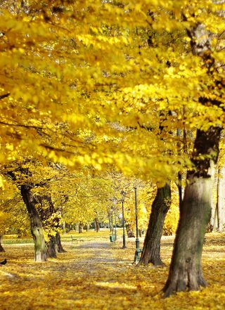 Fall yellow