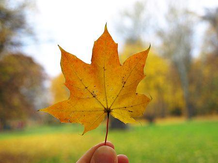 Leaf small 2